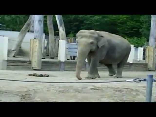 Елена Дриацкая Розовый слон
