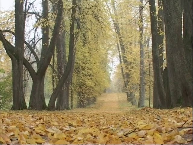 Лина Мкртчян Элегия о золотом листопаде