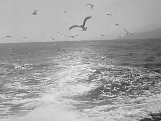 Тамара Миансарова Печальная чайка