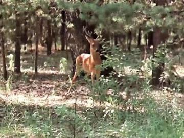 Клара Кадинская Лесной бал