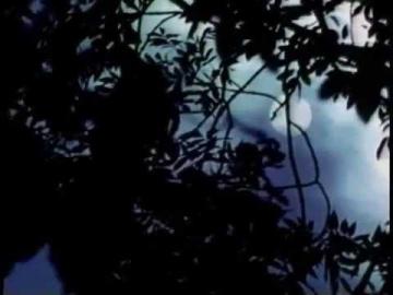 Зара Долуханова Лунная ночь