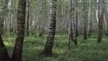 Маргарита Суворова Баллада о берёзе
