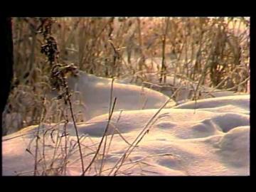Виктория Иванова В зимнем лесу