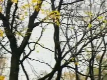 Эльмира Жерздева Осень золотая